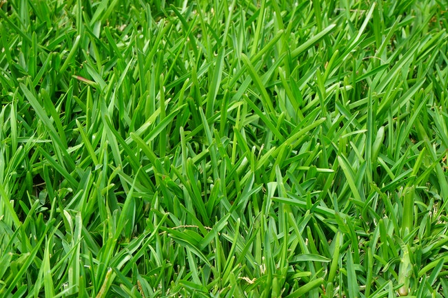 When is the Right Time for New Lawn Seeding and Overseeding?