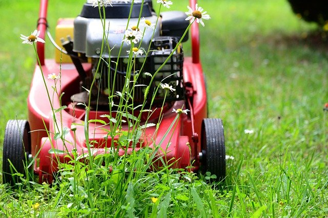 Why Consistent Landscape Maintenance Services are Essential