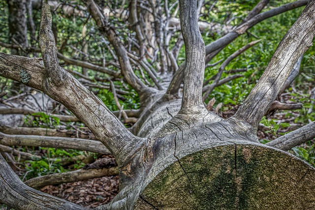 Tree Removal Basics: Benefits of Removing Dead Trees