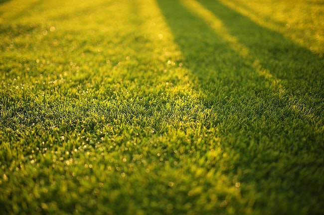 Fall is the Perfect Time for New Lawn Seeding